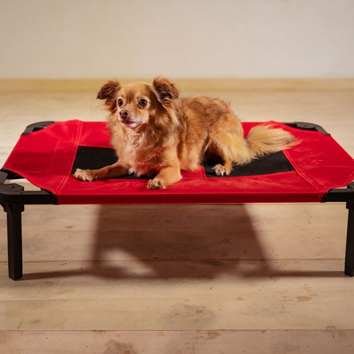 Elevated Indoor - Outdoor Dog Bed, Pet Cot | Lucky Dog