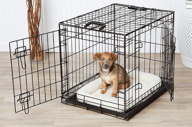 Puppy Crate Training. Patience.