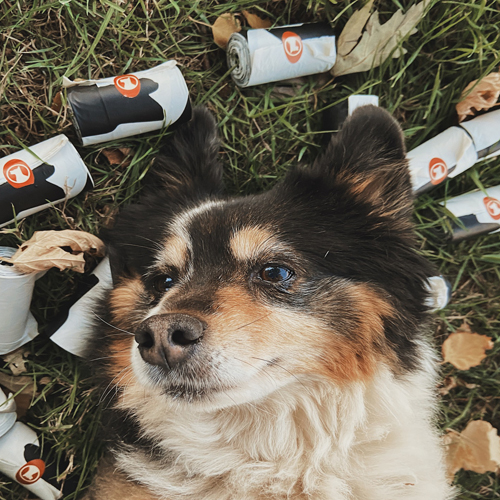 Lucky Dog Poop Bags Lifestyle